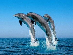 Dolphins Algarve luxury Holidays